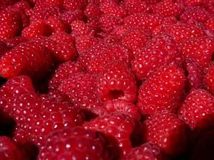 Healthy Fruit Juice Recipes